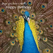 Birthday Card Peacock (SM14103HB)